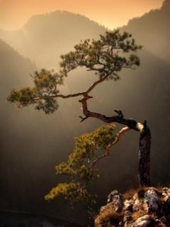 Bonzai_In_Nature
